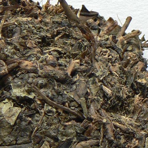 2010 CNNP Sheng Huo Fu Zhuan Cha detail - žluté tečky jsou ušlechtilá plíseň Aspergillus Cristatus